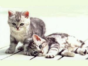 gatti pet terapy