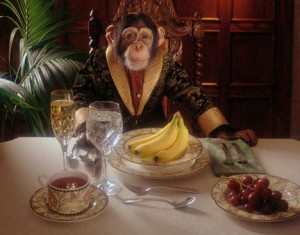 scimmia abbondanza